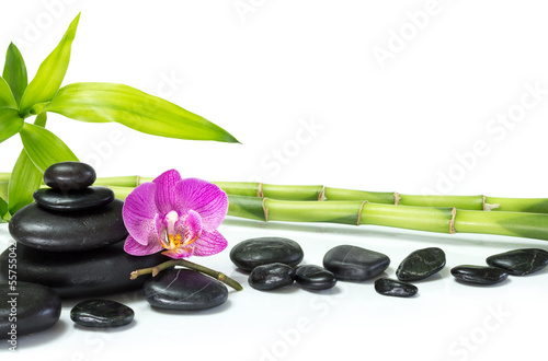 purple orchid with bamboo and many stones