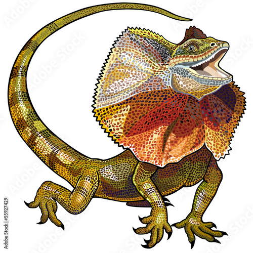 Fotografie, Obraz frill necked lizard