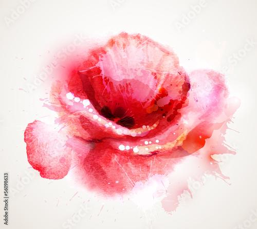 Kwitnący czerwony mak