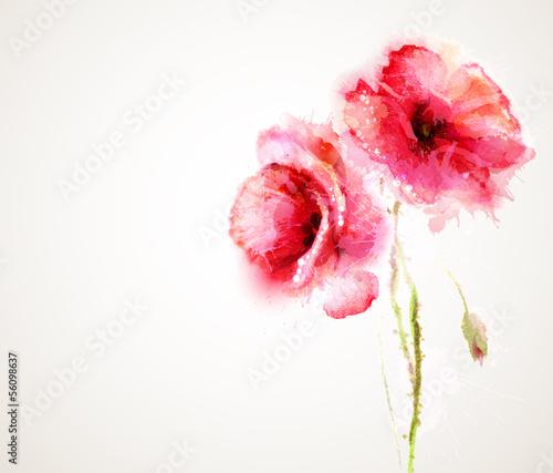 Dwa kwitnące czerwone maki. Kartka z życzeniami.