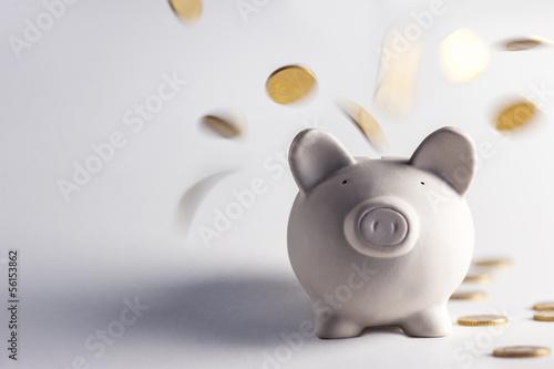 Slika na platnu pig