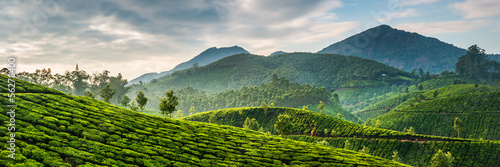 Obraz na plátně Tea plantations