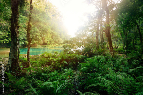 Obraz na płótnie Mysterious Mayan jungle in the national park Semuc Champey Guate