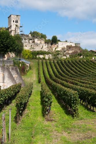 Vineyard at Saint-Emilion, France Fototapet