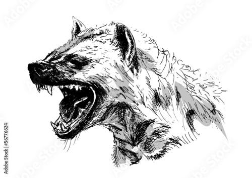 Tablou Canvas hyena – vector illustration