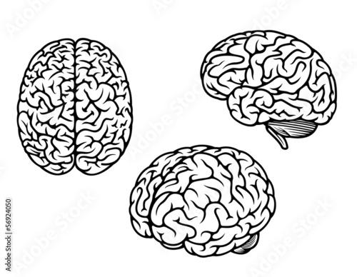 Leinwand Poster Menschliches Gehirn in drei Ebenen
