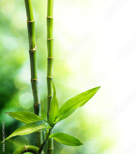 two bamboo stalks and light beam