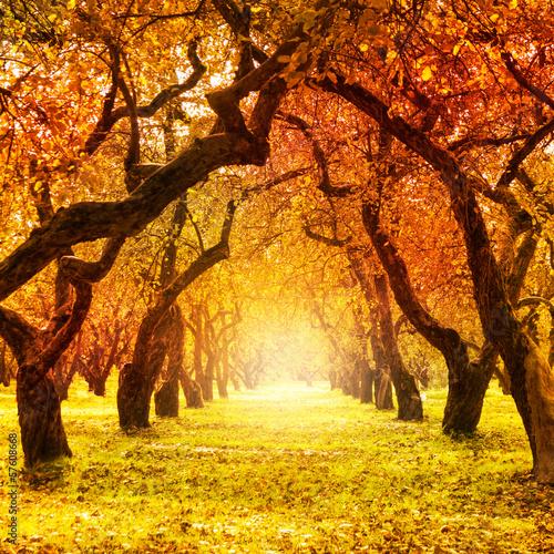 Jesień. Spadek. Jesienny Park