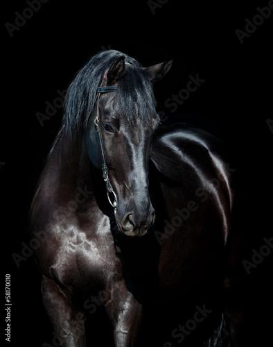 Black horse isolated on black background #58170010
