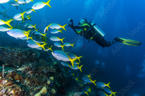 diving with Yellow and Blueback Fusilier Fototapet