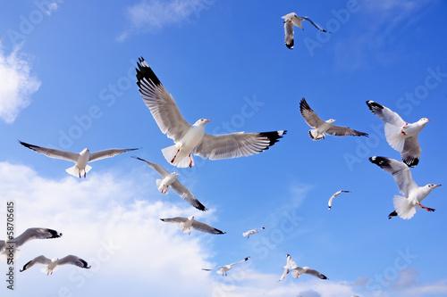 Canvas Print seagulls