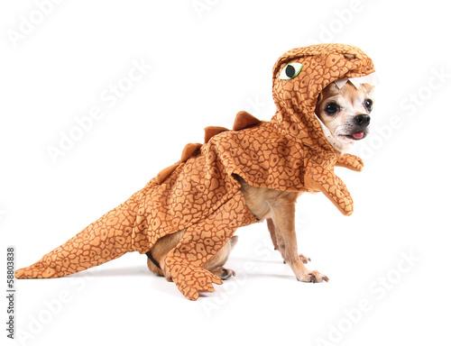 Obraz na płótnie a cute chihuahua in a costume