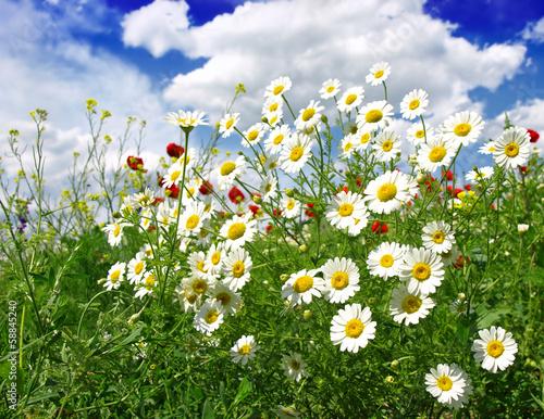 Fototapeta premium Letnie kwiaty