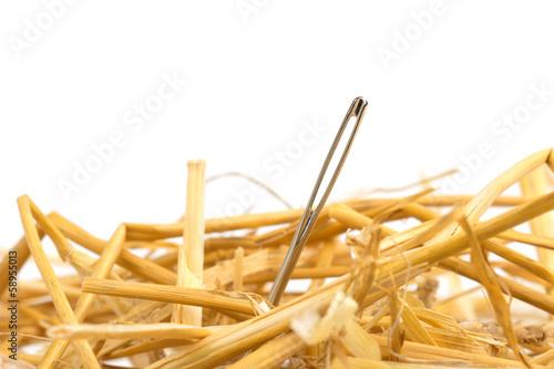 Fotografia needle in a haystack