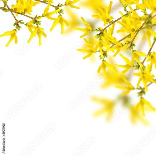 Postcard with spring flowers Fototapeta