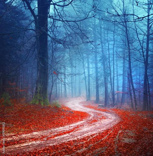 Magic forest road