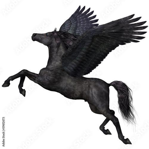 Fotografie, Obraz Black Pegasus Profile