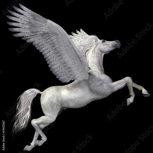 Obraz na plátně White Pegasus Profile
