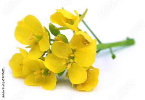 Stampa su Tela Edible mustard flowers