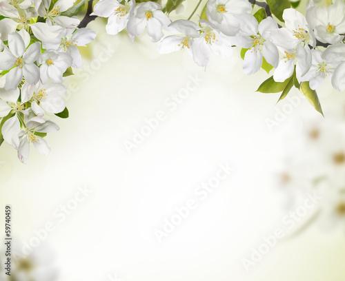 Spring cherry blossom backgrounds