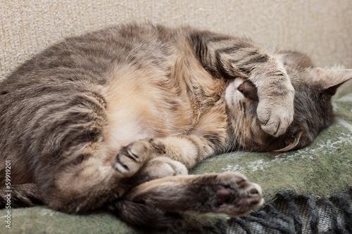 Wallpaper Mural sleeping cat