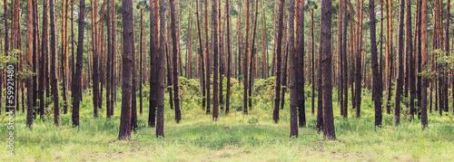 Stampa su Tela forest