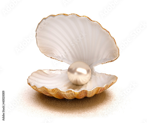 Stampa su Tela shell pearl