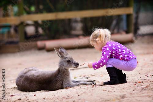 young girl and kangaroo in the zoo