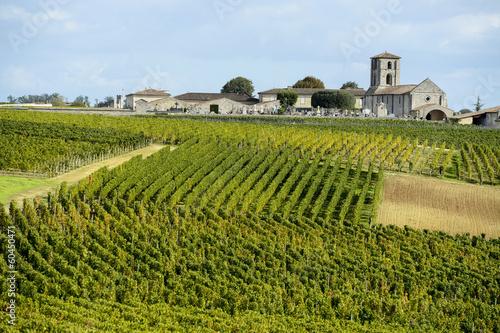 Fotografia Vineyards of Saint Emilion, Bordeaux Vineyards