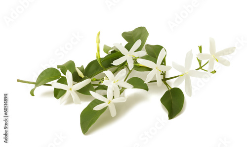 Photo jasmine flowers