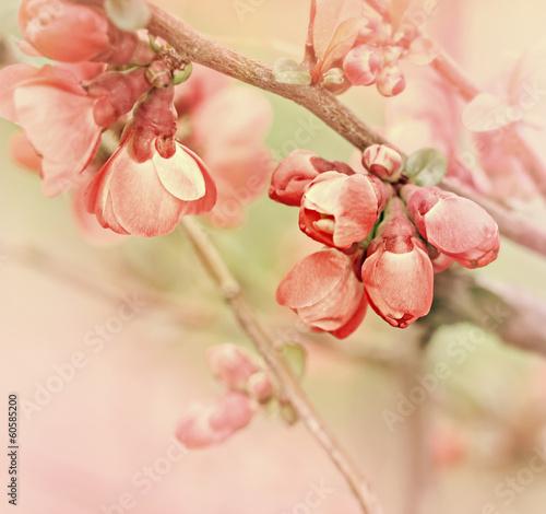 Flowering in spring - buds