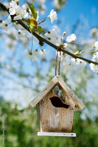 Tableau sur Toile Little Birdhouse in Spring with blossom cherry flower sakura