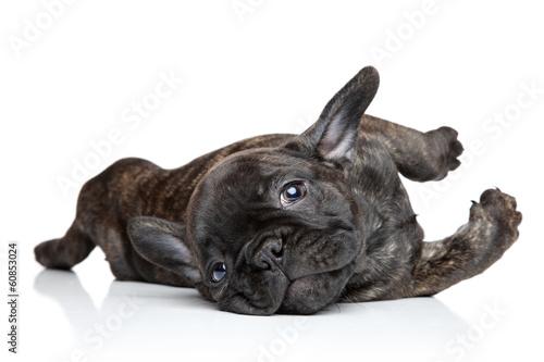 Wallpaper Mural French bulldog puppy resting