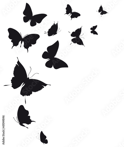 butterflies design #61044846