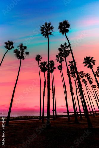 Stampa su Tela California sunset Palm tree rows in Santa Barbara