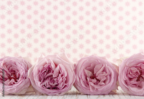 Row of pink roses