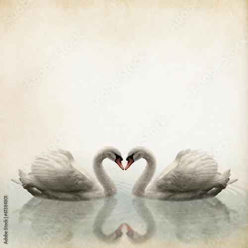 a pair of swan vintage background