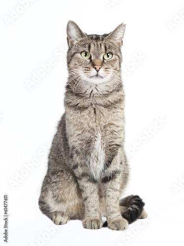 Photo tabby cat looking at the camera