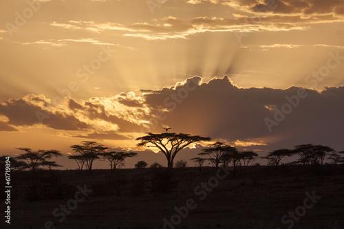 African sunset with acacia and bird