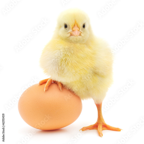 Photo chicken and egg