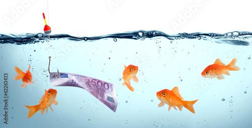 Fotografie, Obraz goldfish in danger - euro as bait - concept deception
