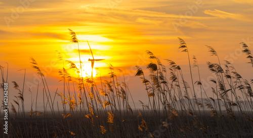 Sunrise over reed in a field in winter