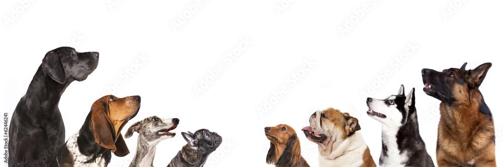 group of dogs is looking up