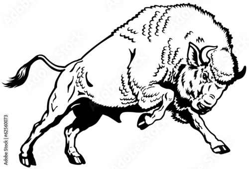 Stampa su Tela europen bison black white