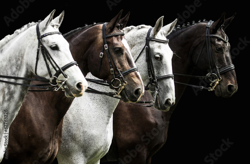 Fotografie, Tablou Four horses in dressage competition isolated on black