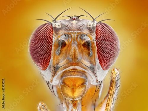 Extreme sharp macro portrait of fruit fly head