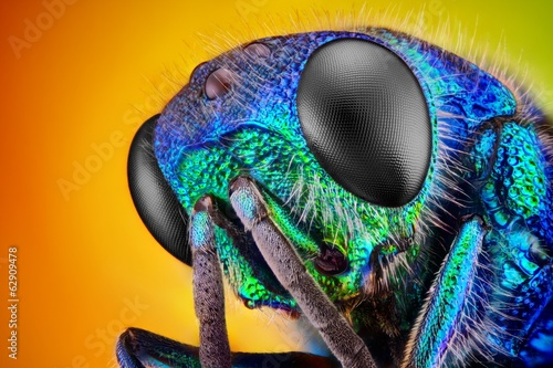 Extreme sharp and detailed study of 6 mm Cuckoo wasp