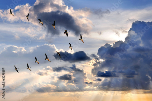 Geese Flying in V-Formation