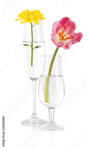 Flowers in glasses of water isolated on white