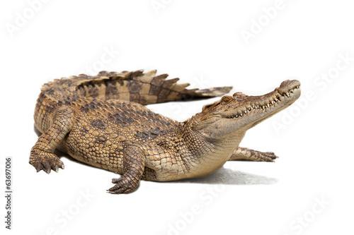 Canvas Print crocodile